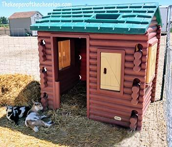 goat shelter sm