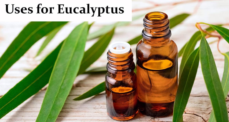 Uses-for-Eucalyptus-fb
