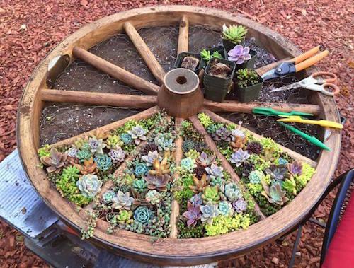 wagon-wheele-succulant-garden