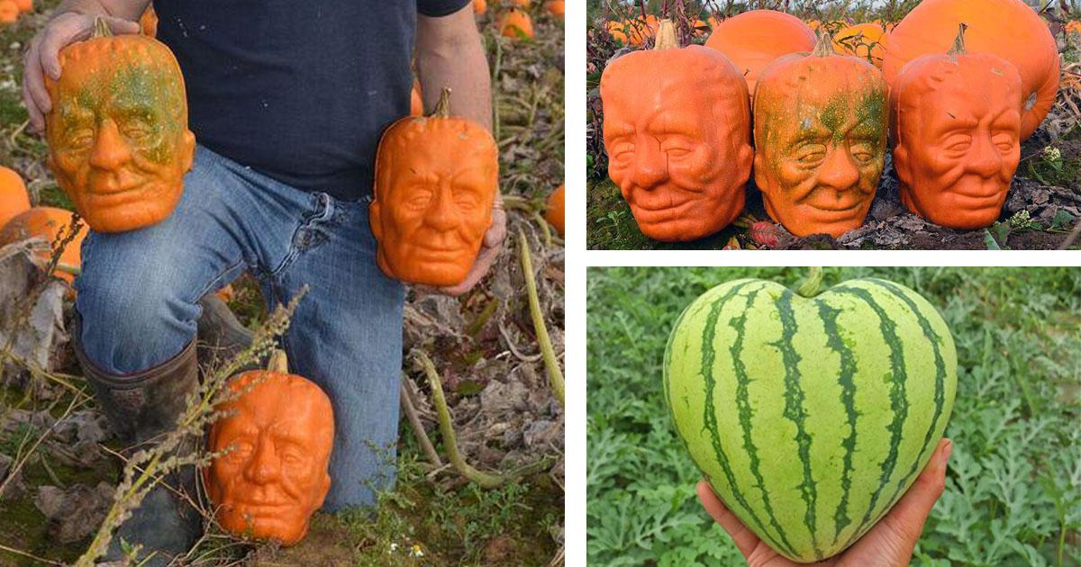 Frankenstein-pumpkins-fbb