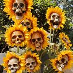 sunflower-skulls-smm