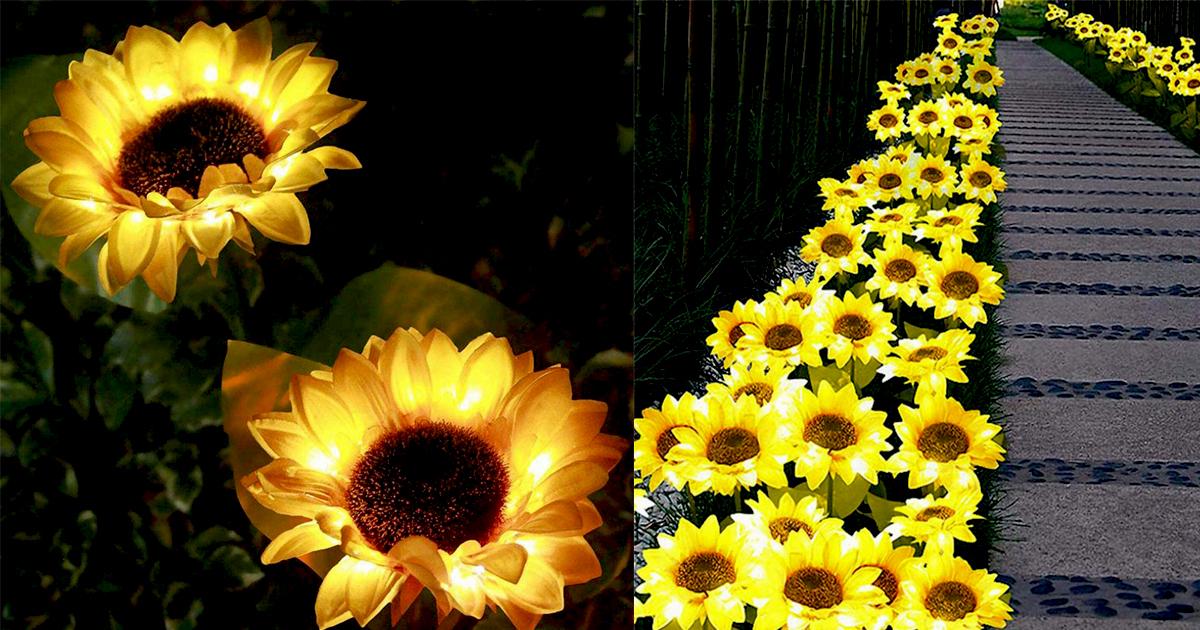 sunflower-lights-fbb